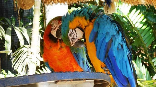 The Umgeni River Bird Park is a bird zoo located in #Durban, in the province of #KwaZuluNatal.