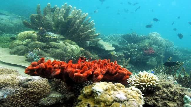 Australia's Great Barrier Reef a contentious issue in the climate change debate. #reed #australia #travel