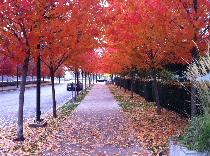 Vancouver in the Fall