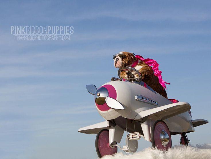 Pink Ribbon Puppies - Bulldog [photography by thank Dog. photography]