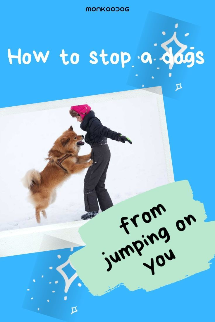Here Is A Simple Method To Stop Your Dog From Jumping Up On People