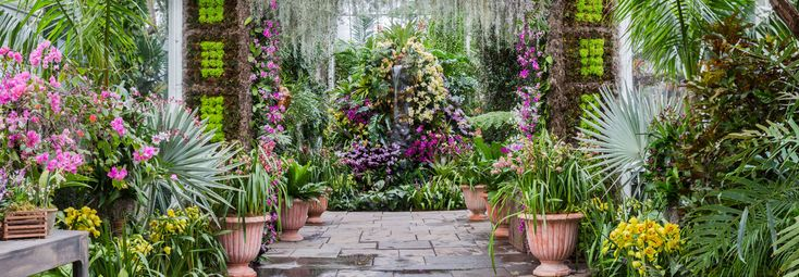 The Orchid Show | NYBG