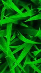 Green Nexus 5 Wallpapers HD 89