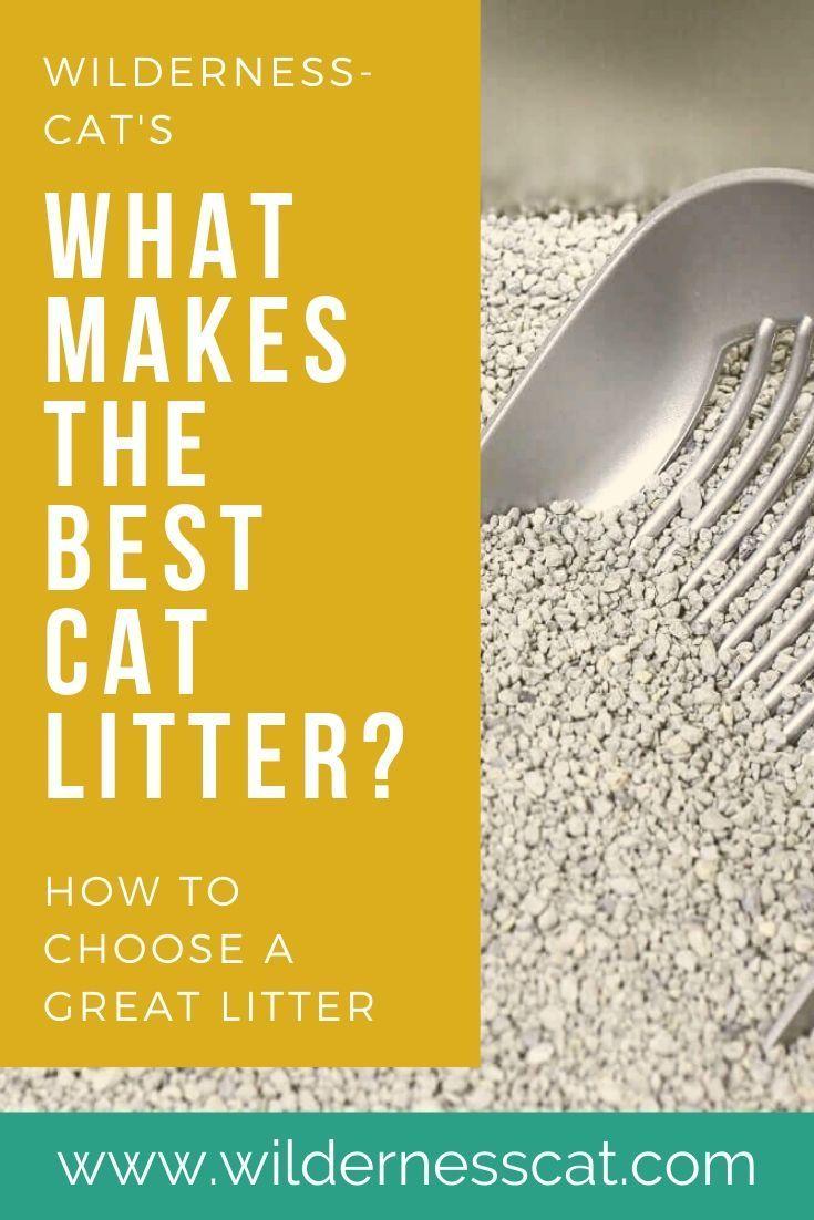 The Best Cat Litter In The World 11 Best Cat Litters Of 2020 In 2020 Best Cat Litter Cat Litter Clay Cat Litter