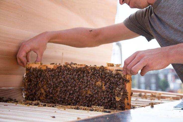 Project B apiculture urbaine par Marc-André Roberge
