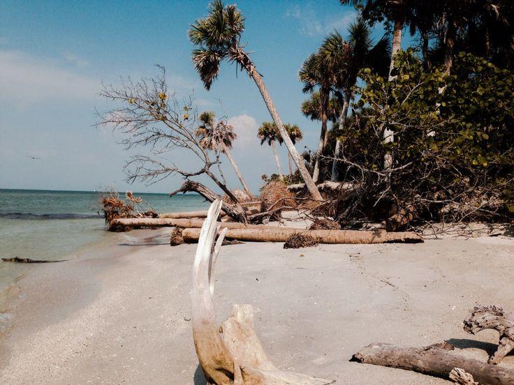 things tampa beaches