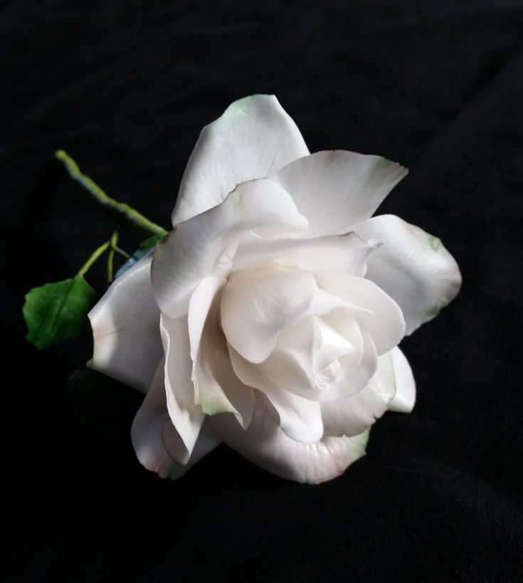 Sugar Rose by https://www.facebook.com/UnusualCakesForYou