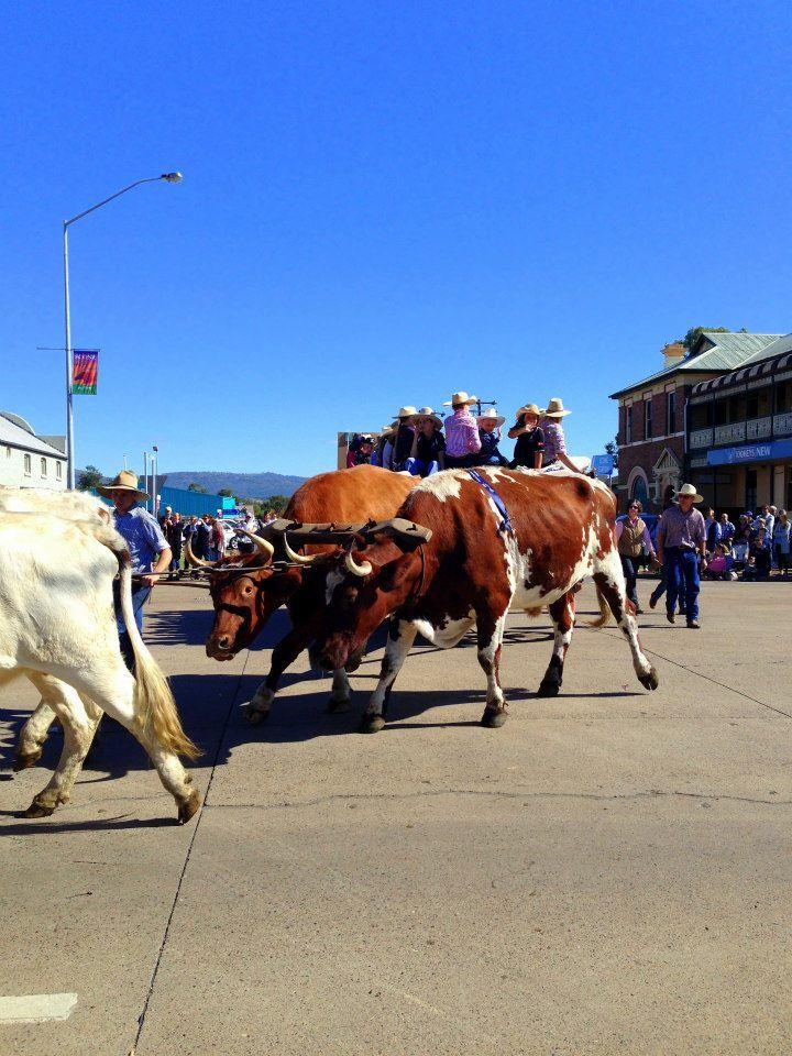 2015 Scone Horse Festival Parade