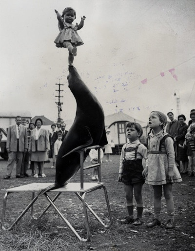 seal trick?  or kid trick?: Seals, Dolls, Paste Life, Sea Lion, Vintage Circus, Children, Kids, Vintage Photo, Photography