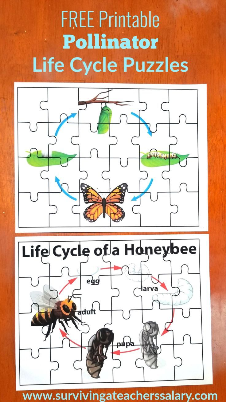 Predownload: Free Bee Butterfly Life Cycle Printables Puzzles Butterfly Life Cycle Life Cycles Bee Life Cycle [ 1308 x 736 Pixel ]