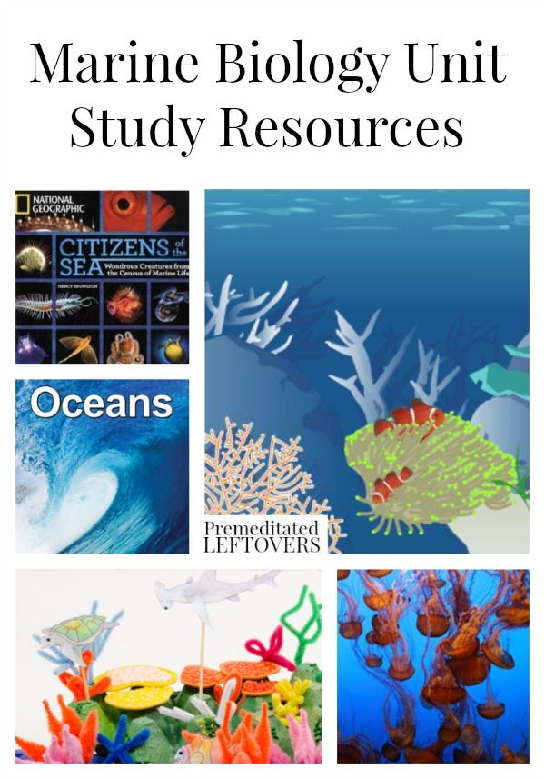 Marine Biology Unit Study Resources, including marine biology lesson plan ideas, ocean unit study ideas, and educational resources for marine biology.