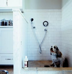 34 Best Images About Pet Bath Ideas For Basement On Pinterest Dog Bathing Bathing And Dog Shower