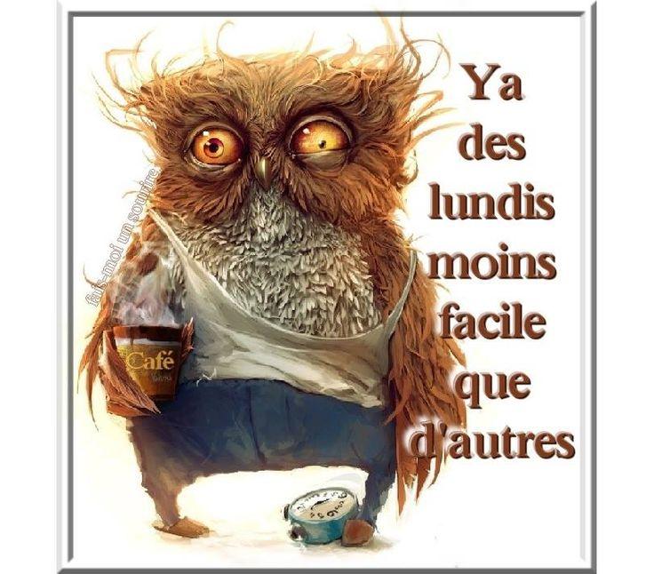 Bon Lundi Humour - Images, photos et illustrations gratuites pour ...