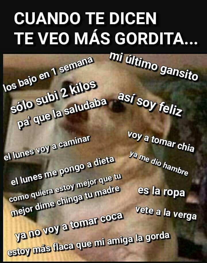 Cuando te dicen te veo más gorda #memes #perrito