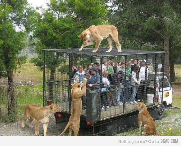 Is this a wild animal zoo or a human zoo for wild animals?: Wild Animal, Lion, Buckets Lists, Be Free, Parks, Newzealand, Boxes Lunches, The Zoos, New Zealand