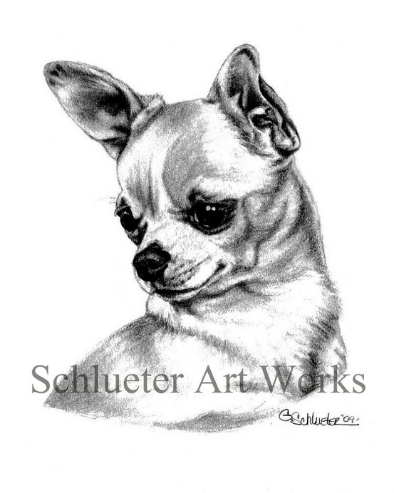 "The #Chihuahua sketch ~ Available in 8x10"" prints at www.etsy.com/shop/gensart. Come to see more work by  #pet portrait artist Genevieve Schlueter."