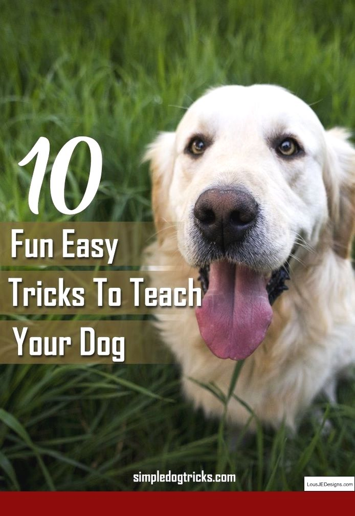 How To Train Your Small Dog Not To Bark And Pics Of How To Train