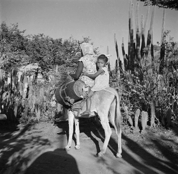 #Aruba 1947 #Caribbean