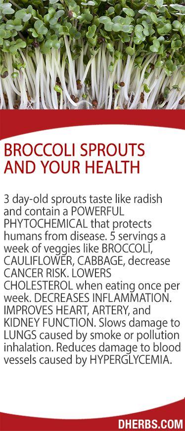 Broccoli Seeds and Your Health