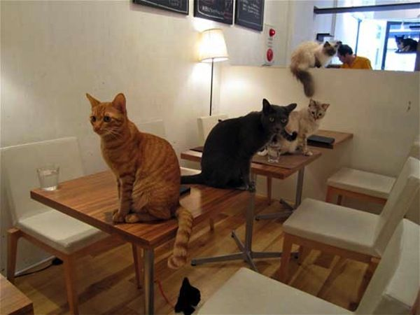 "Japanese Cat Cafe:  these ""neko"" (Japanese for ""cat"") cafes originated in Taiwan and have since been imported to Tokyo. One of the more famous, Cat's Store, allows patrons to simultaneously get a caffeine fix and indulge their need for feline companionship in a city where limited space often means pet-free apartments."