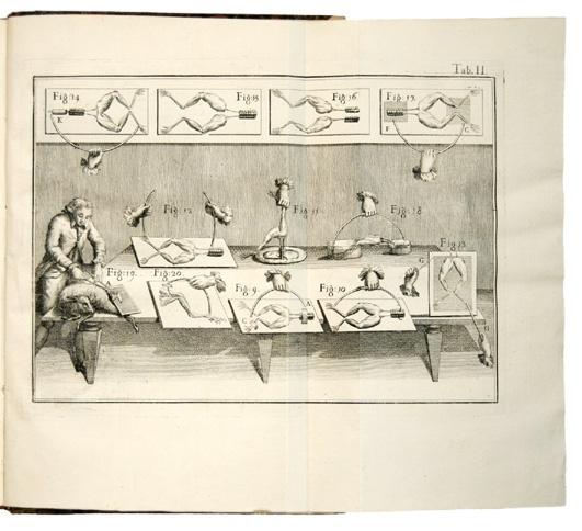 An engraving of the electrical stimulation of dead frogs from Luigi Galvani's De Viribus Electricitatis In Motu Musculari (1792).