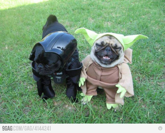 best 25 yoda dog costume ideas on pinterest diy crochet yoda hat pugs and cute baby pugs. Black Bedroom Furniture Sets. Home Design Ideas