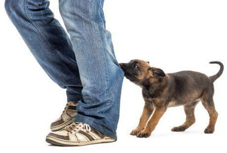 Cara Melatih Anjing Agar Tidak Menggigit ~ Dokter Hewan