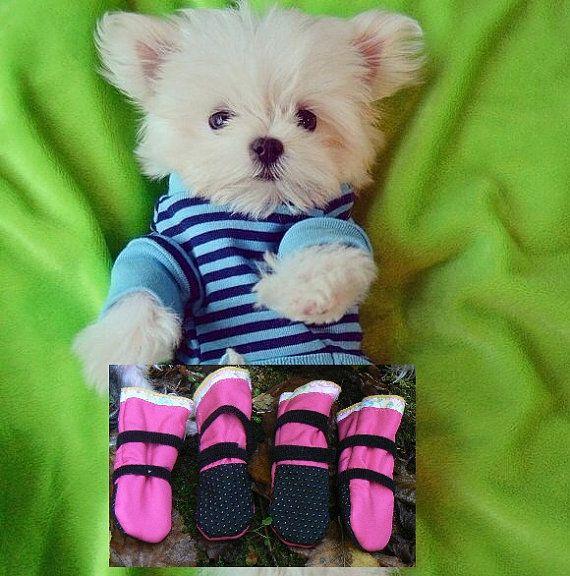 Mejores 78 imgenes de dog info en pinterest bichn habanero agua best dog boots custom fitted water resistant gortex dog solutioingenieria Images