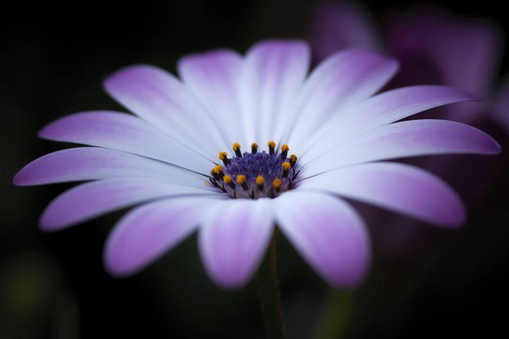 Beauty. - Testing the sigma 105 macro...