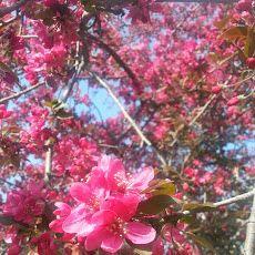 Fiori ,flowers,flores,fleurs - Piante da fiore e Bacche - Community - Google+