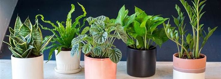 Best 20+ Low Light Houseplants Ideas On Pinterest
