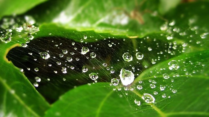 Water Drops on Spider Web Wallpaper