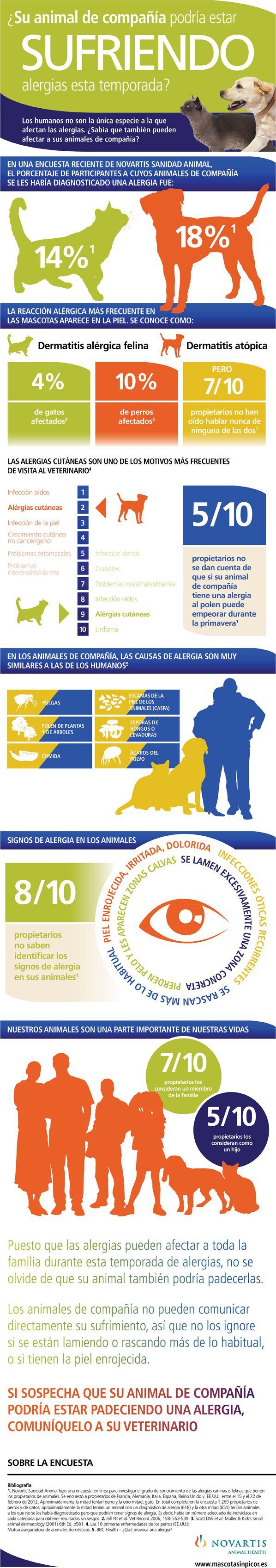 Echa un vistazo a esta infografía sobre las alergias en perros y gatos.