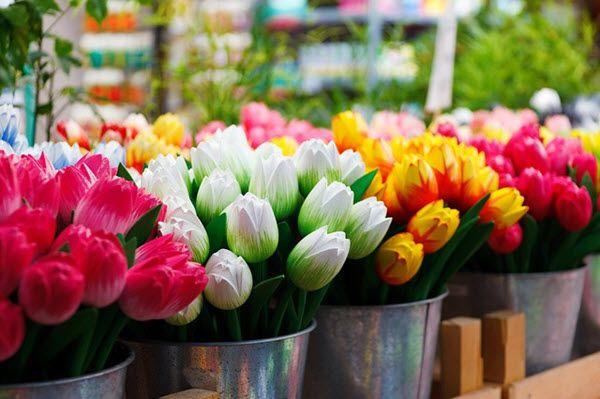 Avec les variétés de fleurs proposées et un cadre pittoresque, le Bloemenmarkt d'Amsterdam figure parmi les incontournables de la capitale hollandaise. Quelle que soit la saison, faisant fi du froid, de la pluie ou de la neige, le marché aux fleurs flottant est l'endroit le plus vivant et le plus coloré de la ville. L'unique …