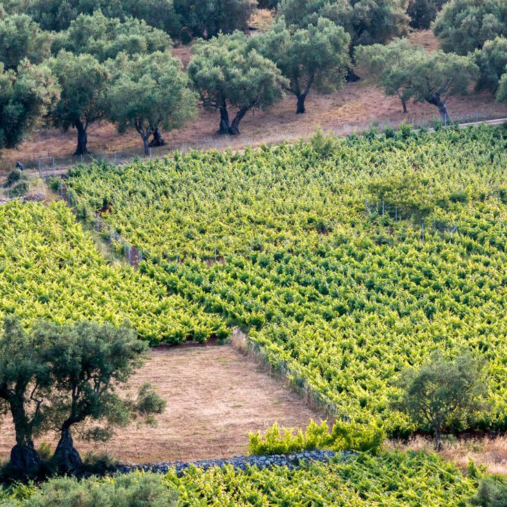 If you envision green vacations, we'll take you deep into the wilds of Greece – rural hikes and outdoor activities, with a menu of locally produced fresh products. Discover our #alternative #tours