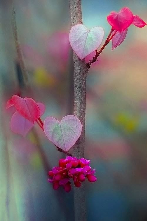 Surely there is a window from Heart to Heart: they are not separate or far from each other. ~Rumi
