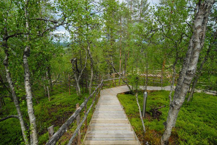 Pathway. Image by Kimmo Hyötylä.