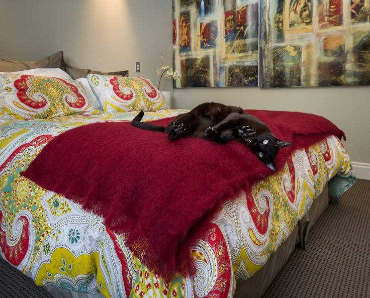 Deep red mohair throw blankets work well at the foot of your bed. Check out that gorgeous cat!
