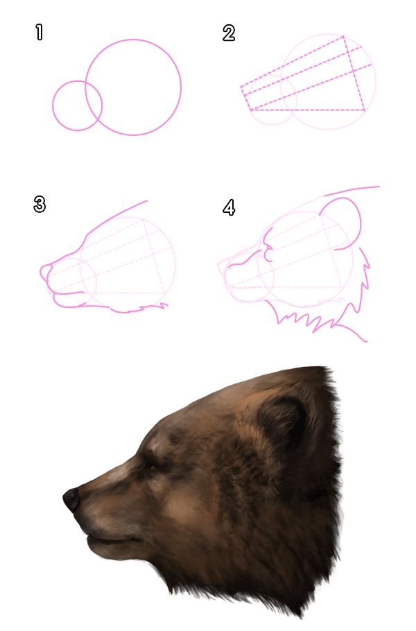 howtodrawbears-3-1-grizzly-brown-bear-head