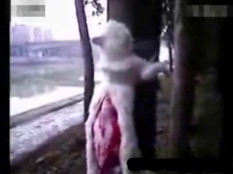 http://www.thepetitionsite.com/2/stop-the-cat-cutters/ CAT CUTTING in CHINA. Chinese kids filming each other while tying cats to trees, and torturing them to death, through horrible unspeakable sufferance that can be read in the eyes of the victims. The animals are slowly skinned alive. What a sick society this country is.
