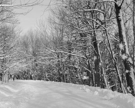 Photograph of a brave jogger, running through a snow covered forest, taken in Montreal, Quebec. Fine art print, Wall art print. TITLE: Winter