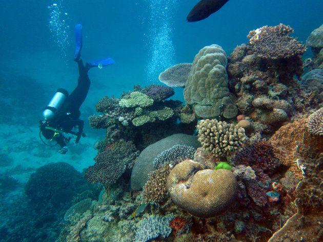 Diving in Australia's Great Barrier Reef