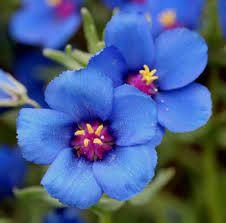 las flores mas lindas del mundo - Buscar con Google