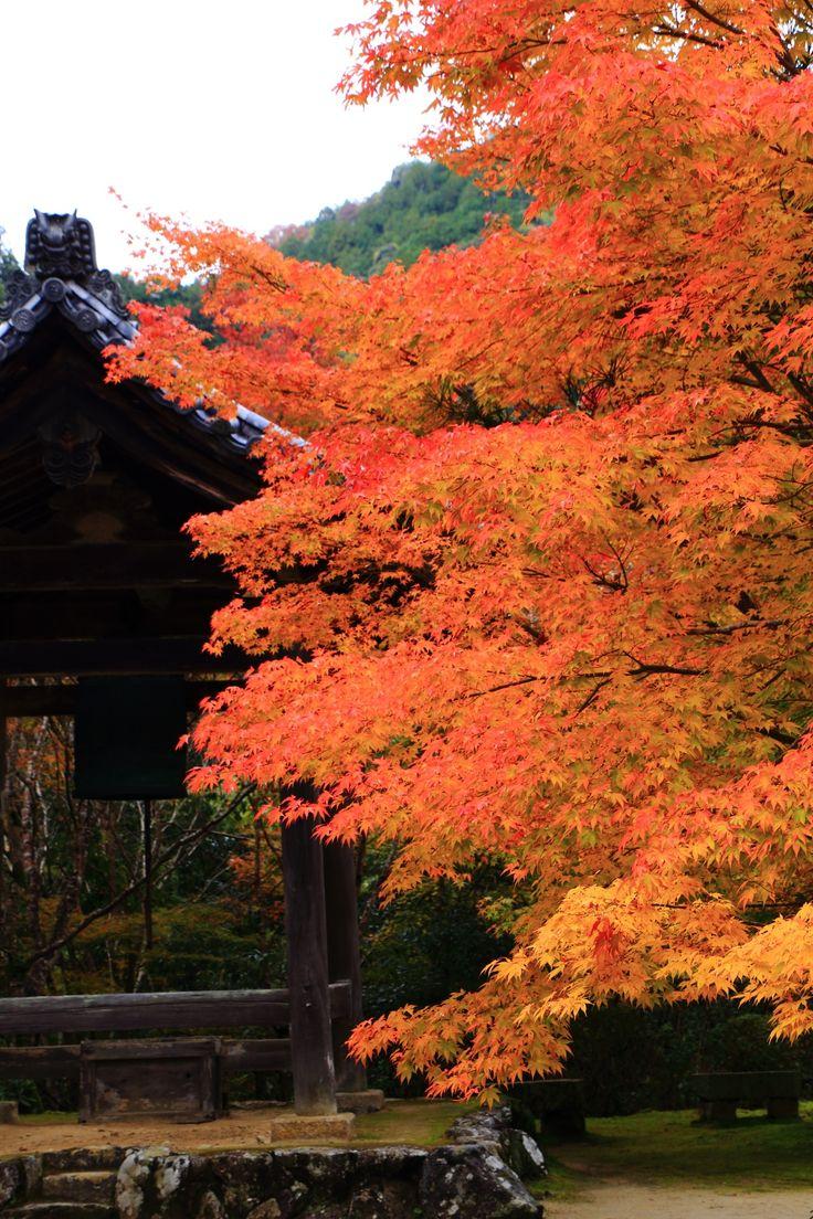 Kyoto Saimyo-ji Temple colored leaves