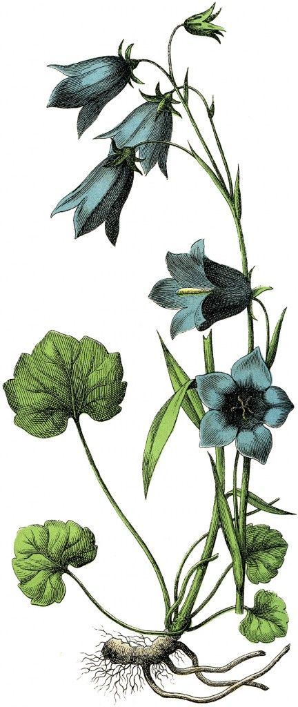 Vintage Blue Flowers Image - Lovely! - The Graphics Fairy