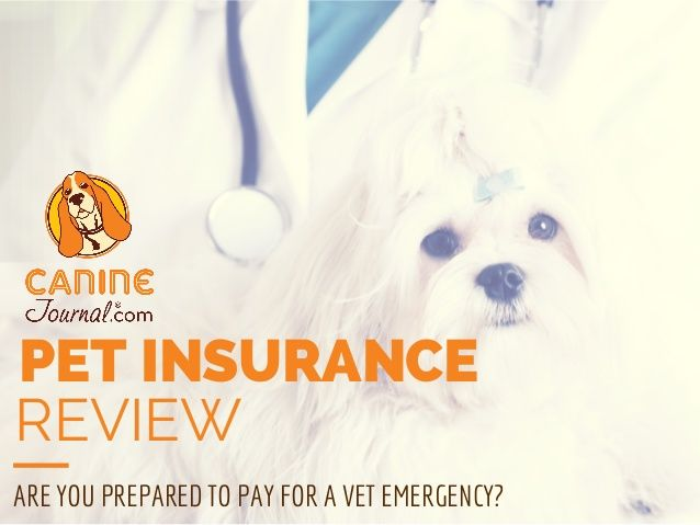 Considering pet insurance? Check out these reviews.