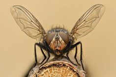 How to Get Rid of Flies Naturally   Simple and Effective Ways to Repel Flies by Survival Life at http://survivallife.com/how-to-get-rid-of-flies-naturally/