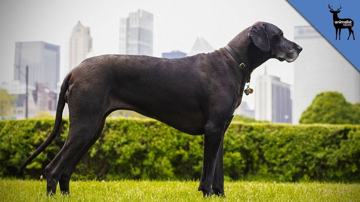 cool The World's Tallest Dog has Died