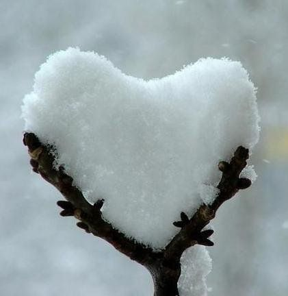 love.: Coldheart, Winter, Nature, Heart Shape, Valentines Day, Snow Heart, Natural, Cold Heart, Snowheart