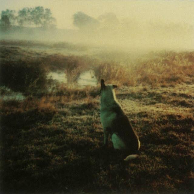 Photo: Andrei Tarkovsky. Polaroid, 1980